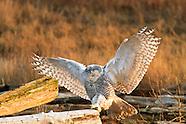 Animals & Wildlife Pictures