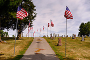 29 AUGUST 2020 - RUNNELLS, IOWA: American flags line the driveway into Lowman Cemetery in Runnells, IA. Pvt. Roy Brown Jr. was interred in the cemetery today. He was a US Army soldier in World War II. He was an infantryman in the 126th Infantry Regiment, 32nd Infantry Division, serving in the Australian Territory of Papua (now Papua New Guinea). He went missing in action on Dec. 2, 1942. Unidentified remains were recovered on Feb. 2, 1943 and were eventually interred in the Manila American Cemetery. On May 14, 2019, Defense POW/MIA Accounting Agency using dental records, circumstantial evidence and DNA identified the remains as Pvt. Brown's. He was reinterred in the Lowman Cemetery in Runnells Saturday.     PHOTO BY JACK KURTZ