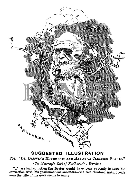 """Suggested Illustration For """"Dr. Darwin's Movements and Habits of Climbing Plants."""""""