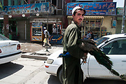 Afghanistan. Kabul streetscene. Man crossing the road carrying a peacock.