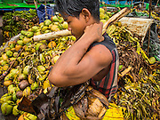 """10 JUNE 2014 - YANGON, MYANMAR:   Unloading bananas on the banana jetty. The """"banana jetty"""" is on the Yangon River north of central Yangon on Strand Road. Bananas, coconuts and other fruit are brought in here from upcountry, sold and reshipped to other parts of Myanmar (Burma). All of the labor here is done by hand. Porters carry the produce to the jetty and porters load the boats before they steam upriver.   PHOTO BY JACK KURTZ"""