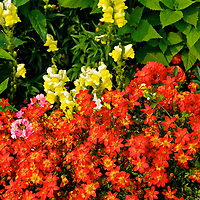 Flower garden by the Port Angelas Landing.<br /> Editted 9/18/18<br /> Printed 9/21/18