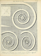 Method of describing the Ionic Volutes, common, angular and elliptical Copperplate engraving From the Encyclopaedia Londinensis or, Universal dictionary of arts, sciences, and literature; Volume II;  Edited by Wilkes, John. Published in London in 1810