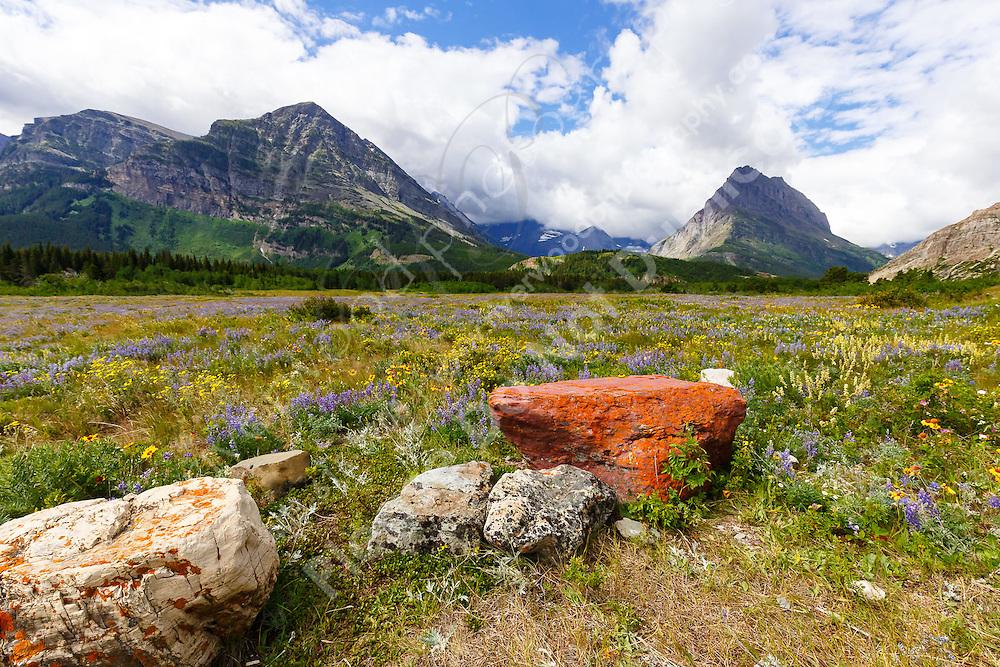 Landscape photography in the Many Glacier region of Glacier National Park<br /> <br /> ©2016, Sean Phillips<br /> http://www.RiverwoodPhotography.com