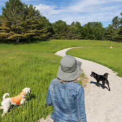 Dog walking at the Shepards Farms Preserve in Norway, Maine.