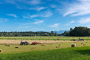 First cutting of hay in the Dungeness Valley near Sequim, WA as springtime comes to a close and summer soon arrives. Usually farmers get 3 cuttings here.