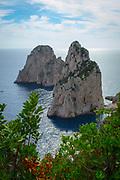 Faraglioni rock stacks off the coast of Capri island with bushes in the foreground.