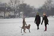 Pet dogs enjoy the snow in Ruskin Park, south London during the bad weather covering every part of the UK and known as the Beast from the East because Siberian winds and very low temperatures have blown across western Europe from Russia, on 1st March 2018, in Lambeth, London, England.