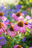 Jessi Bloom Herbalist