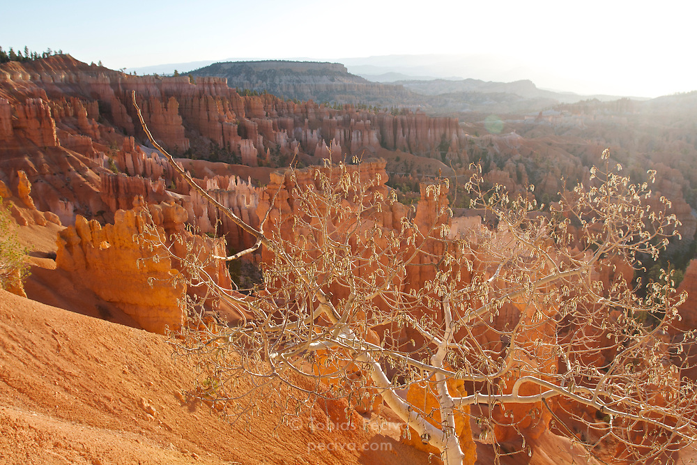 Early morning view over Bryce Amphitheater, in Bryce Canyon National Park, Utah.