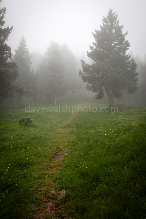 Moody forest in the fog. Col de Mantet, Pyrenees Orientales, France