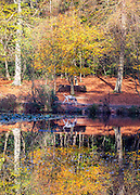 © Licensed to London News Pictures. 27/10/2014. Burnham, UK. A Dalmatian dog walks past autumn colours reflecting in a pond. People walk through the autumnal trees in the mooring sunshine at Burnham Beeches an area of 220 hectares of ancient woodland in Burnham, Buckinghamshire. Today 27th October 2014. Photo credit : Stephen Simpson/LNP