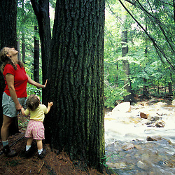 Pownal, VT. A mother and her young daughter enjoy the scenery along Broad Brook.  Large white pine trunk.  Green Mountains.