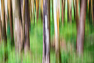 Forest abstract in Munnar, Western Ghats Mountains, Kerala, India