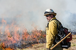 Fire specialist monitoring prescribed burn on the Blackland Prairie at Clymer Meadow Preserve, Texas Nature Conservancy, Greenville, Texas, USA.