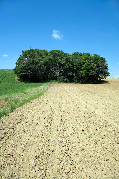 bare and green plot of agricultural land France Languedoc