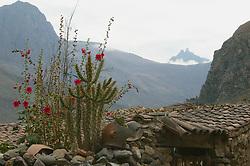 Flora Scenic