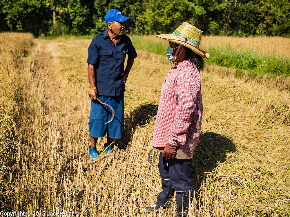"""08 DECEMBER 2015 - KO WAI, NAKHON NAYOK, THAILAND:  Farmers in their rice paddy during the rice harvest in Nakhon Nayok province, about two hours north of Bangkok. Thai agricultural officials expect rice prices to go up by as much as 15% as global production of rice is cut by the Pacific Ocean El Niño weather pattern. Thailand's rice production is expected to drop in the coming year. Persistent drought has reduced the main crop, currently being harvested, and the military government has ordered farmers not to plant a second crop of """"dry season"""" rice to conserve Thailand's dwindling supply of water. Thailand's water reservoirs are at their lowest seasonal levels in recent memory and little rain is expected during the dry season, which lasts until June.   PHOTO BY JACK KURTZ"""