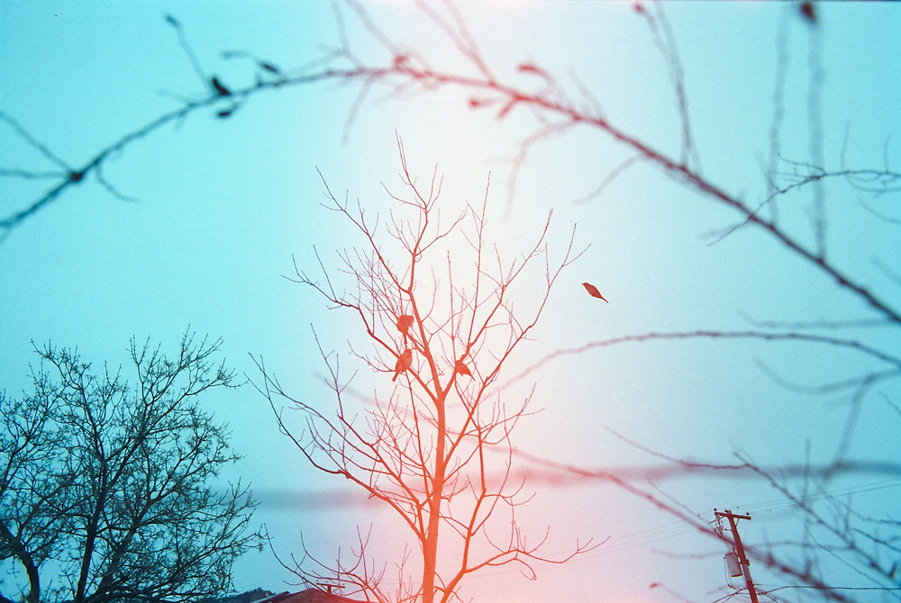 A bird joins other birds in a tree, Boulder, Colorado.