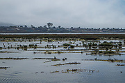 Birds flock in the wetlands around Morro Bay, San Luis Obispo, California, USA