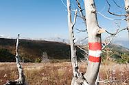 Trail markings on Vrh Bora, Peaks of the Balkans trail, Montenegro © Rudolf Abraham
