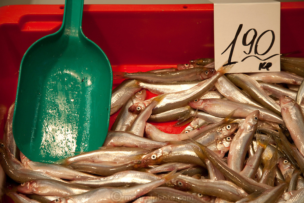 Fish for sale at the Central Market in Riga, the capital of Latvia.  Riga's Central Market, established in 1201, is one of Europe's largest and most ancient markets.