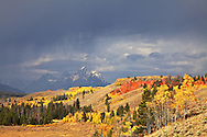"""Thunderstorm, Fall Colors, Grand Tetons from the Bridger Teton National Forest<br /> <br /> For production prints or stock photos click the Purchase Print/License Photo Button in upper Right; for Fine Art """"Custom Prints"""" contact Daryl - 208-709-3250 or dh@greater-yellowstone.com"""