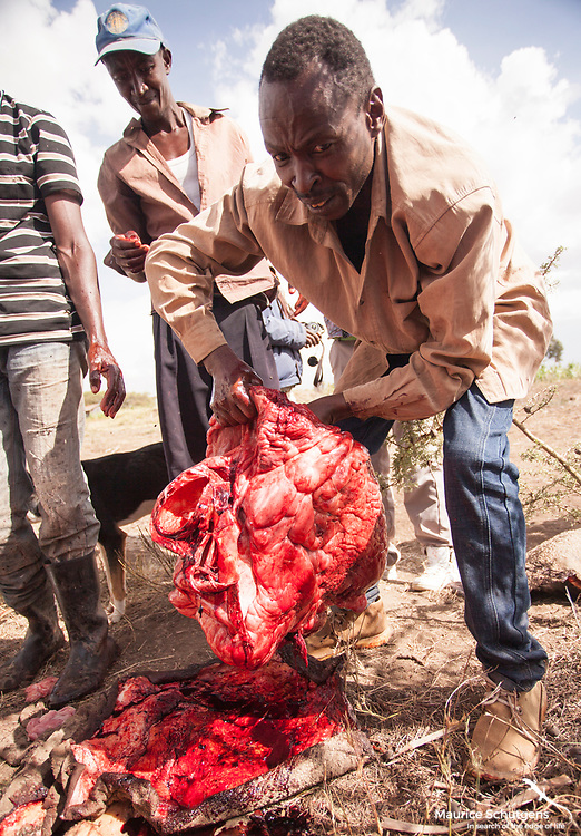 The butchering of an elephant by community members after an incident of human elephant conflict in Laikipia, Kenya.<br />