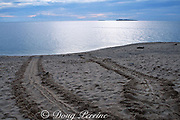 """distinctive """"tractor tread"""" tracks on the beach mark where a green sea turtle, Chelonia mydas, has crawled up to nest then returned to the ocean, Selingaan Island, Turtle Islands Park, Sabah, Borneo, Malaysia (Pacific)"""