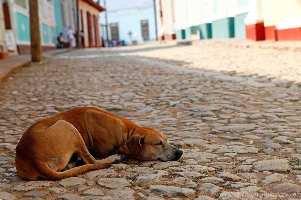 Central America, Cuba, Trinidad. Dog sleeping in the street in Trinidad, Cuba.