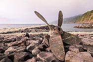 01-11-2016 Azoren Golf Eilanden. Foto's van São Miguel, het grootste van de negen eilanden van de Azoren, Portugal.