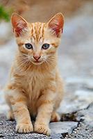 Grece, iles Ioniennes, Corfou, chat des rues // Greece, Ionian island, Corfu island, street cat