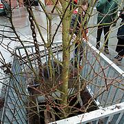 Bomen geplaatst parkeerdek Plein 2000 Huizen door 2 lagen