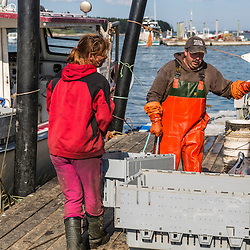 'Miss Carol', captain Frank Smith (Right) and wharf employee Carrie Trunk unload lobster at Great Wass Lobster in Beals, Maine.