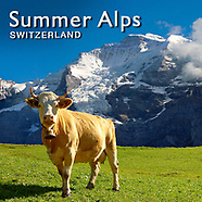 Swiss Alps Summer   Pictures Photos Images & Fotos