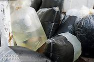 Emballage de poissons d'aquarium (Pygoplites diacanthus)<br /> <br /> Holacanthe duc, Poisson ange duc, Pygoplites diacanthus, Village de Bonebone dans les iles Banggais, Sulawesi, Indonésie - Mission Banggai Cardinal Fish, Mai 2008, Act for Nature - Musee oceanographique de Monaco