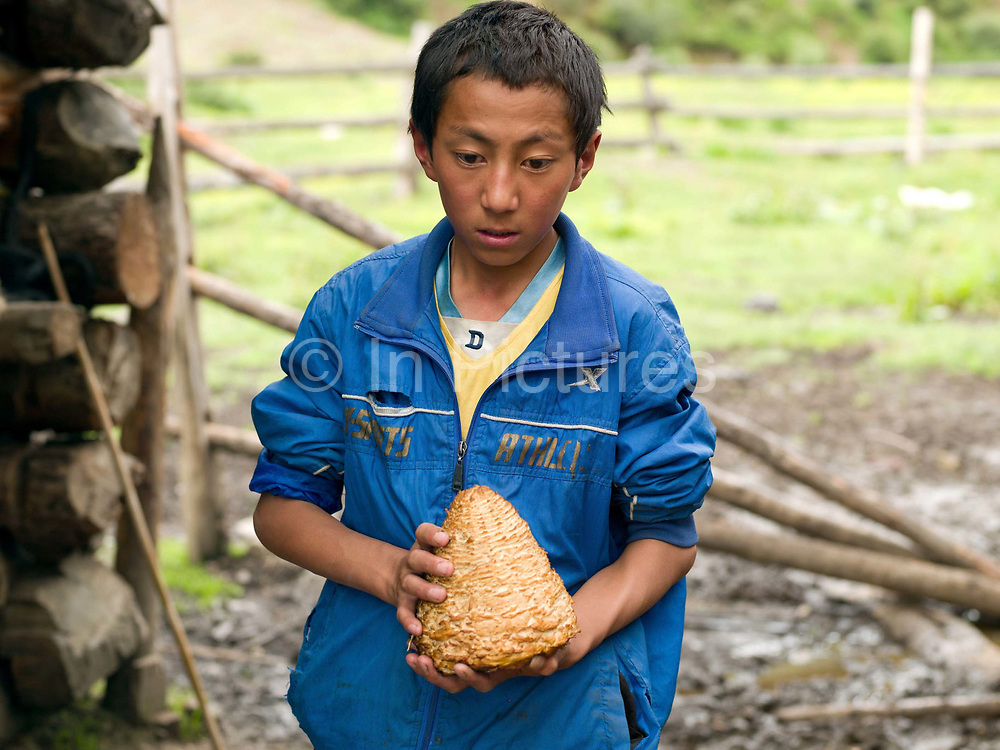 A Tibetan yak herders son holding a yak outside their hut, Sheng Amu, Yunnan Province, China. The shape and texture of the cheese is made by using a bamboo basket mould.