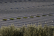 Solar power plant landscape view, with olive trees in the foreground.<br />The plant is located near Brinches, a small rural village, and built in farmland.