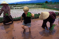 Tunui Franken helps Yao tribe to plant rice..Northern Laos..photo by Owen Franken.