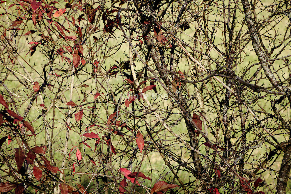 close up of bush type of tree during autumn