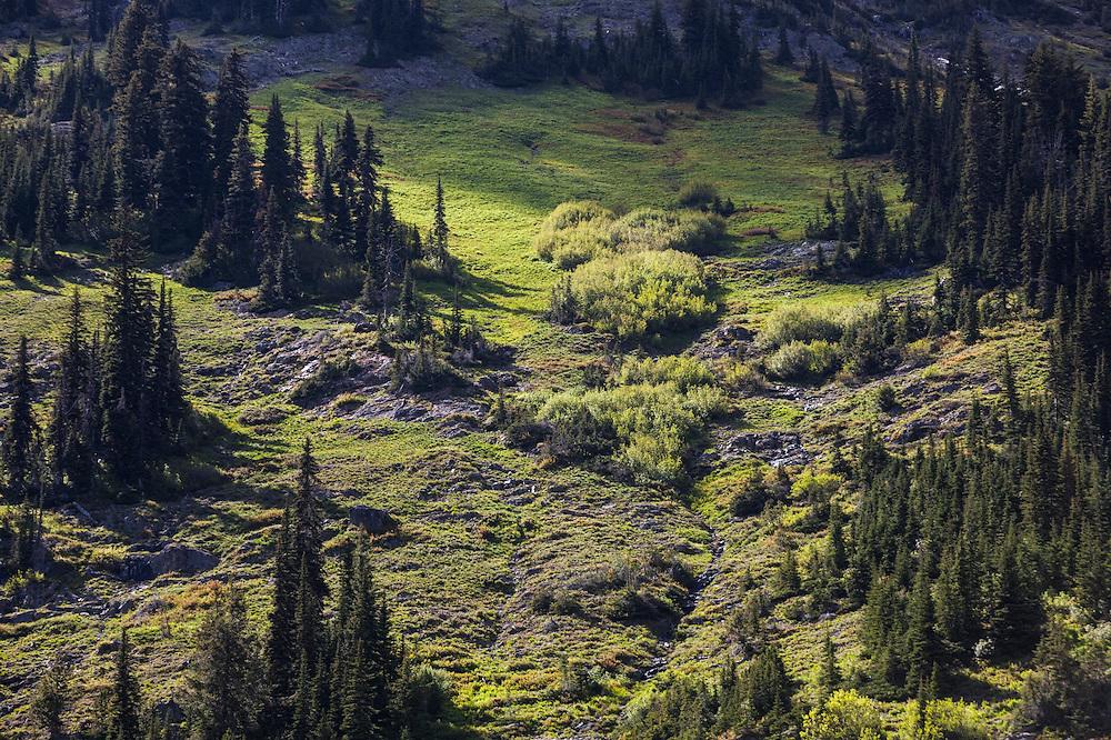 Subalpine meadows interspersed with stands of conifer below Cutthroat Peak, North Cascades Scenic Highway Corridor, Washington.