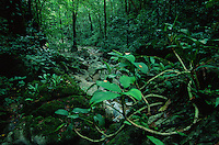 Forest of northwest Panay Peninsula.  Philippines.  May 2001.