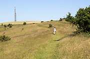 Woman walking on slope of chalk escarpment hillside at Morgan's Hill SSSI, near Calne, Wiltshire, England, UK