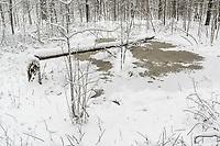 https://Duncan.co/beaver-felled-tree-in-pond
