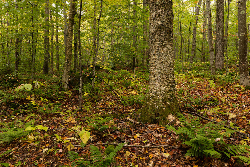 Tree lined forests within New Hampshire's White Mountains.
