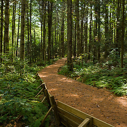 A wheelchair accesible trail in Craftsbury, Vermont. Craftsbury Academy Woodlot.