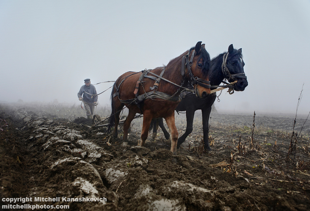 Romanian Hungarian farmer plowing his land with horses