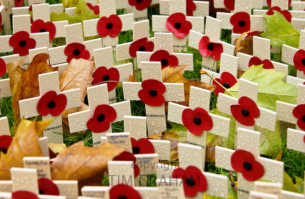 CROSSES IN THE ROYAL BRITISH LEGION FIELD OF REMEMBRANCE AT ST MARGARET'S CHURCH, WESTMINSTER, LONDON