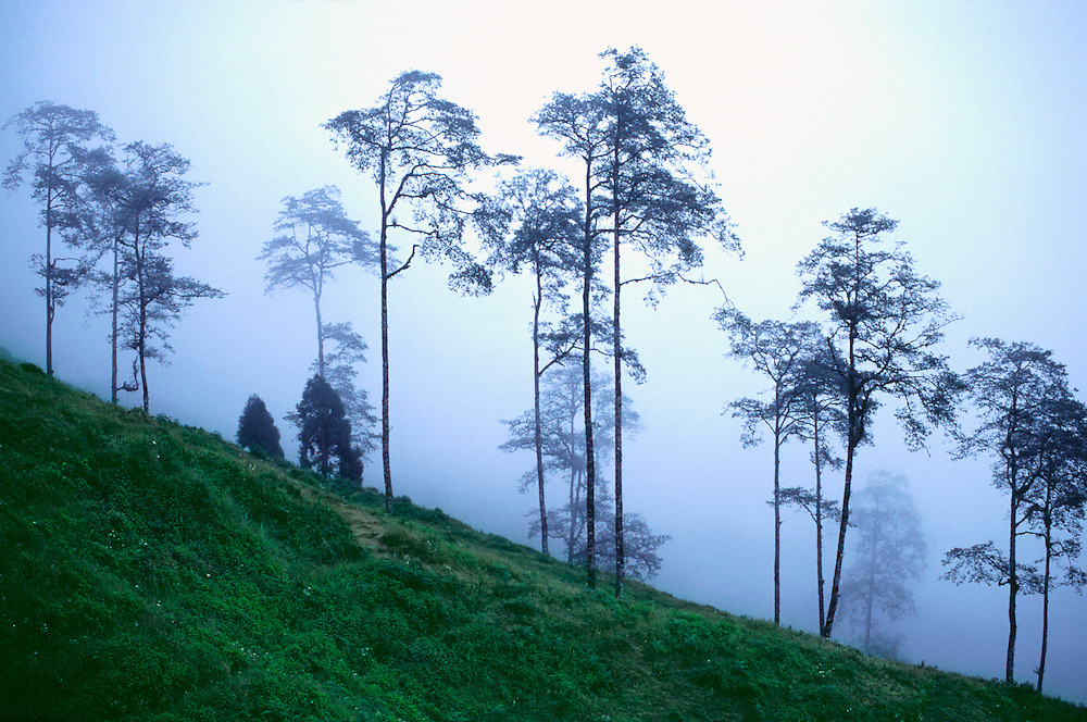 A thick fog creeps through the forest in Darjeeling, India.