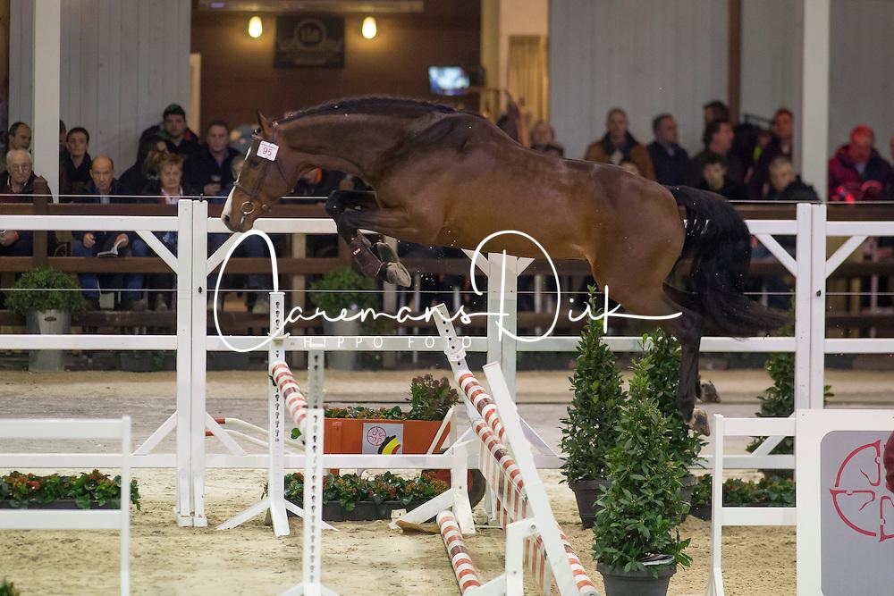 095, Chapeau <br /> BWP Hengsten keuring Koningshooikt 2015<br /> © Hippo Foto - Dirk Caremans<br /> 21/01/16